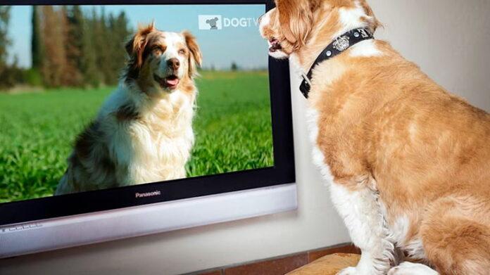 perro-mirando-la-tv