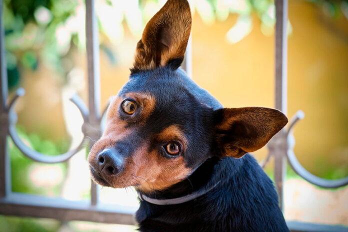 Dog Mind: Que pense mon chien de moi?