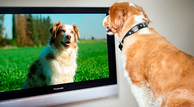 "dog-looking-tv ""width ="" 770 ""height ="" 426 ""srcset ="" https://soyunperro.com/wp-content/uploads/2020/08/dog-watching-la-tv.jpg 770w, https://soyunperro.com/wp-content/uploads/2020/08/perro- being-la-tv-300x166.jpg 300w, https://soyunperro.com/wp-content/uploads/2020/08/perro -être-regarder-la-tv-768x425.jpg 768w, https://soyunperro.com/wp-content/uploads/2020/08/perro- être-la-tv-696x385.jpg 696w, https://soyunperro.com / wp-content / uploads / 2020/08 / perro- see-la-tv-759x420.jpg 759w ""tailles ="" (largeur maximale: 770px) 100vw, 770px"