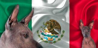 perros-con-bandera-méxicana