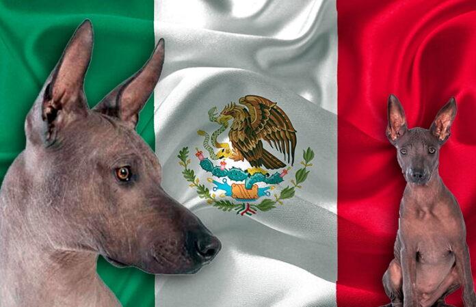 Les meilleurs noms mexicains pour chiens