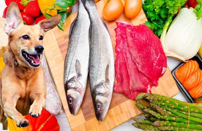 Aliments humains recommandés pour les chiens