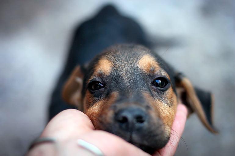 Est-il vrai que les chiens sont méchants?