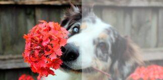 perro-con-flores-en-la-boca