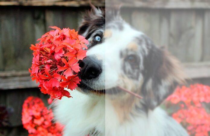 chien avec des fleurs dans la bouche
