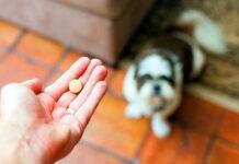 perro-esperando-su-pastilla