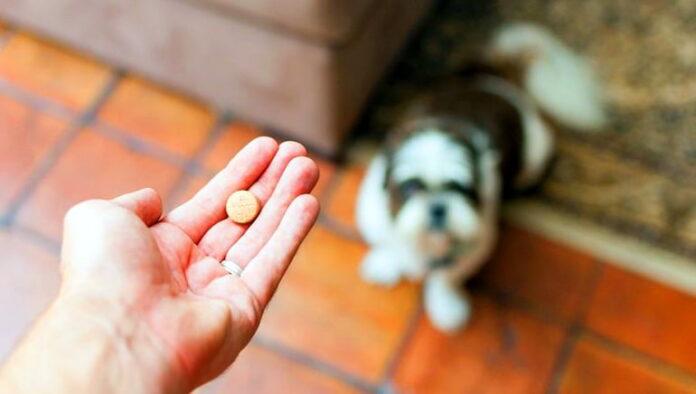 chien-attendant-sa-pilule