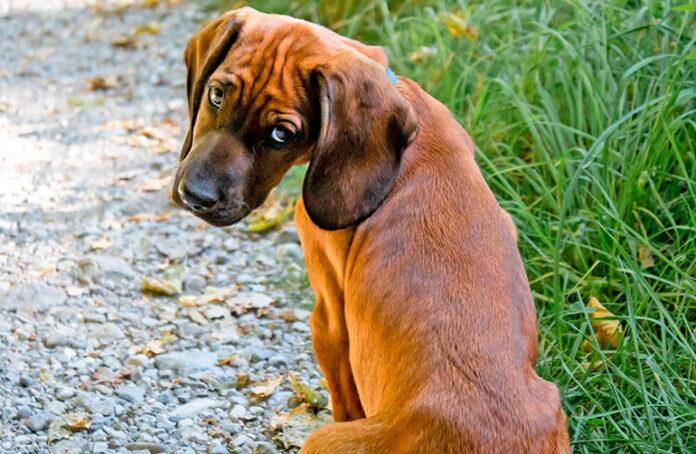 perro-observando-con-rencor
