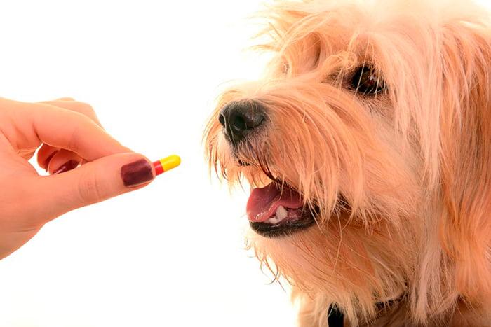 Comment donner une pilule à votre chien à la maison