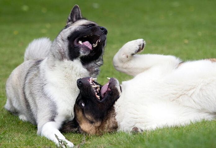 dos-perros-jugando