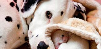 perra-con-sus-cachorros