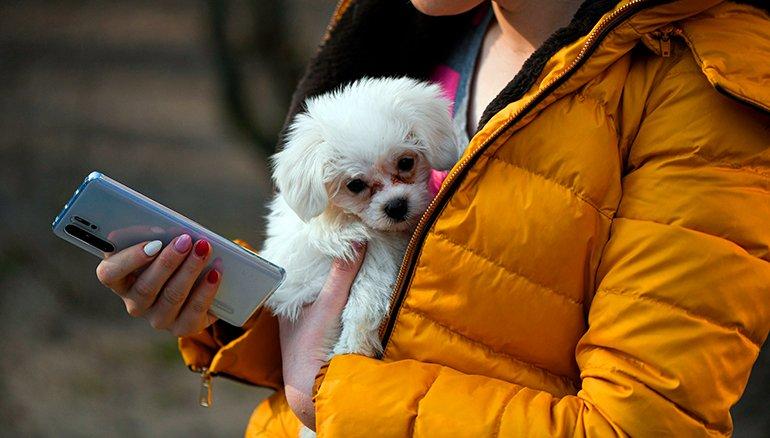 Pourquoi vous ne devriez pas porter votre chien dans vos bras