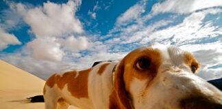perro-en-el-desierto