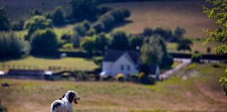 perro-paseando-bajo-el-sol