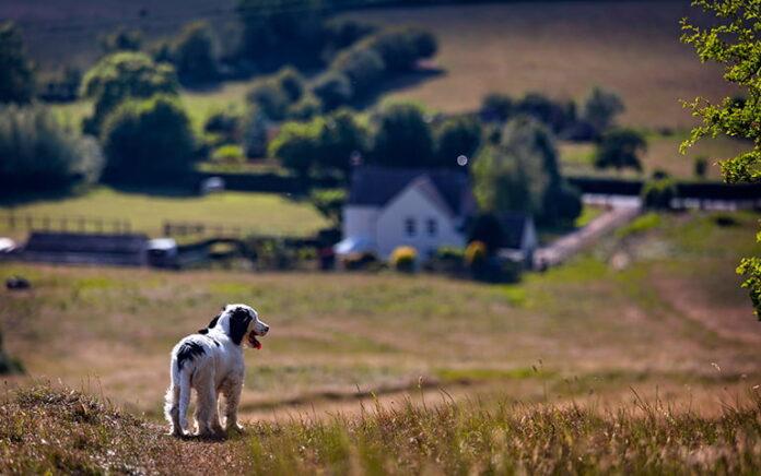 promener un chien sous le soleil