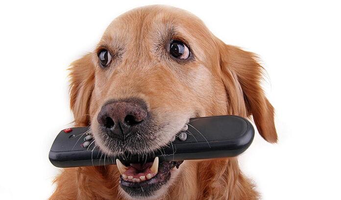 perro-trae-el-mando-de-la-tv