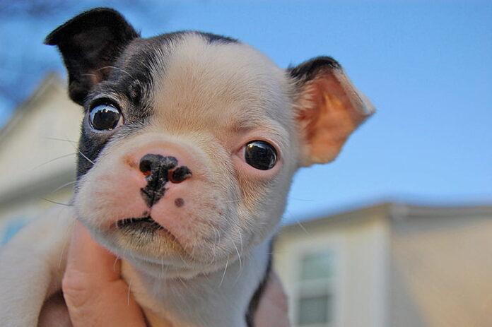La flore intestinale et le comportement des chiens