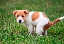 perro-defecando-en-el-jardín