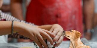 como-hacer-galletas-para-perros