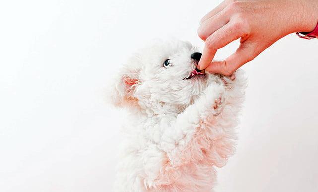 Ce que votre chien fait tous les jours et ne devrait pas