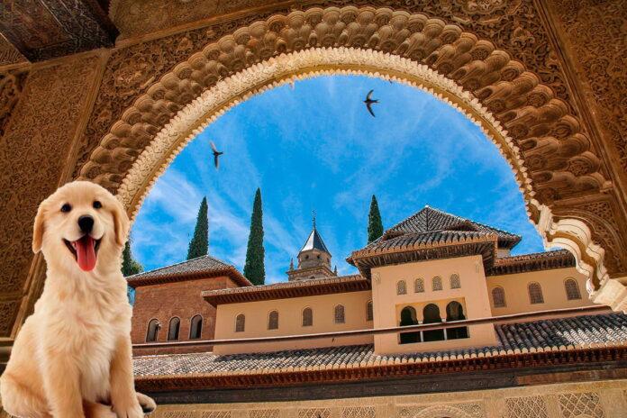 Noms arabes des chiens et leur signification
