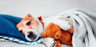perro-acostado-en-su-cama