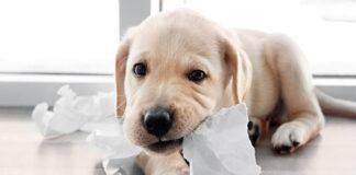 perro-comiendo-papel
