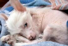 perro-con-manchas-naturales-en-su-piel