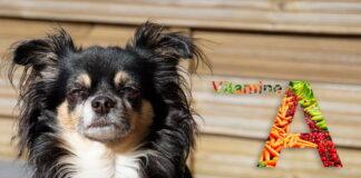 perro-chihuahua-junto-a-logo-de-vitamina-a