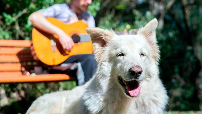 Savez-vous quelle est la meilleure musique pour votre chien?