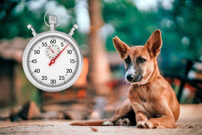 Combien de temps faut-il à un chien pour digérer la nourriture?