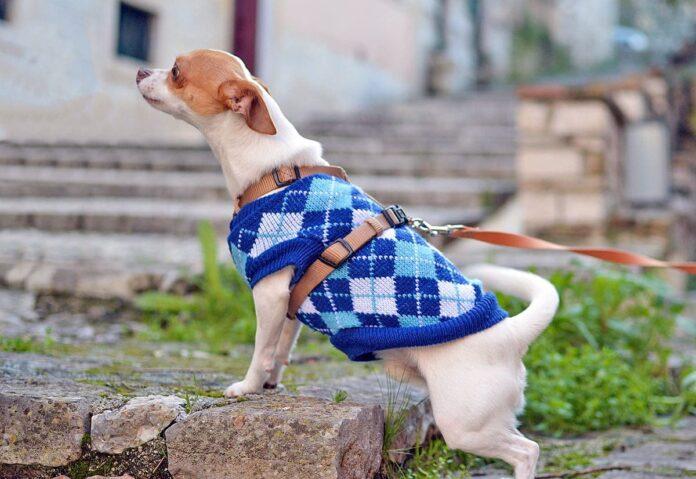 Conseils pour protéger votre chien du froid