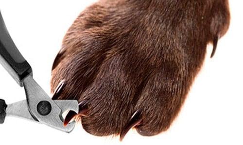 cortar-uñas-perro
