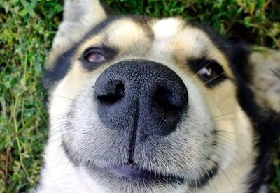 nariz de perro hidratada
