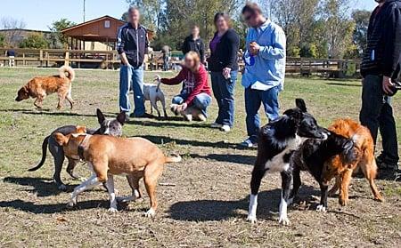perros jugando en el parque