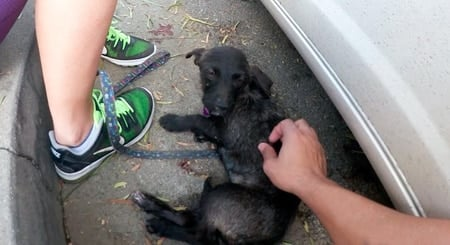 acariciando un perro abandonado