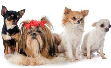 perros de tamaño pequeño