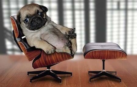 perro en consulta