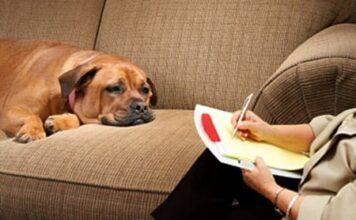 etólogo canino