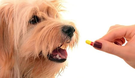 ibuprofeno para perros