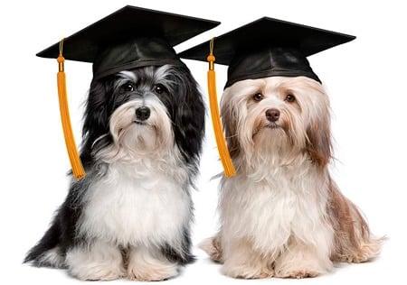 perros licenciados