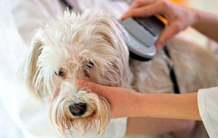lector de microchips en perros