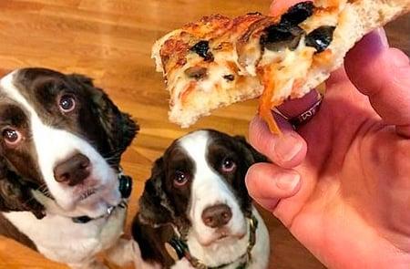 perros pidiendo comida