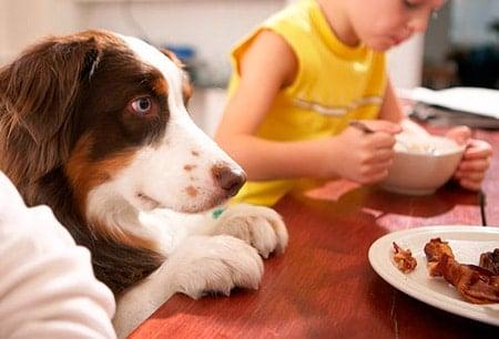 perro esperando comida en la mesa