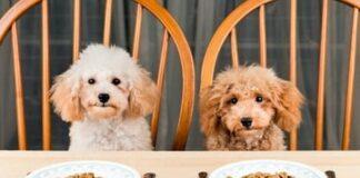 perros sentados en una mesa