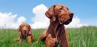 cachorro con su madre