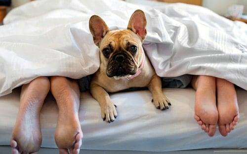 perro haciendo pis sobre la cama