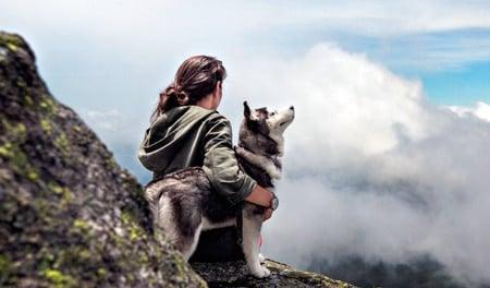 perro Pomsky en la naturaleza