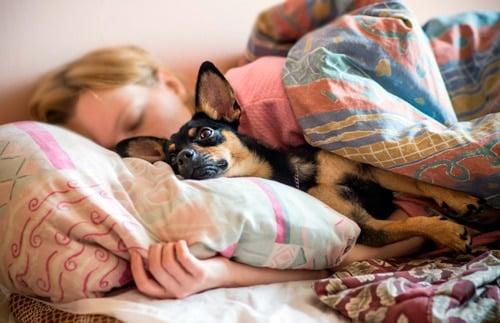 haciendo la siesta con mi perro pequeño
