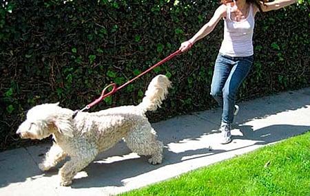 perro tirando de la correa